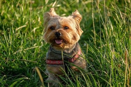 dissolve dog poop on lawn