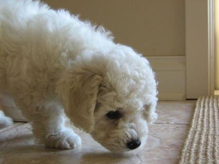 test dog odor after treatment